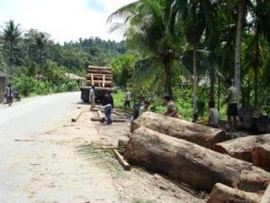 Illegal Logging di Kota Subulussalam