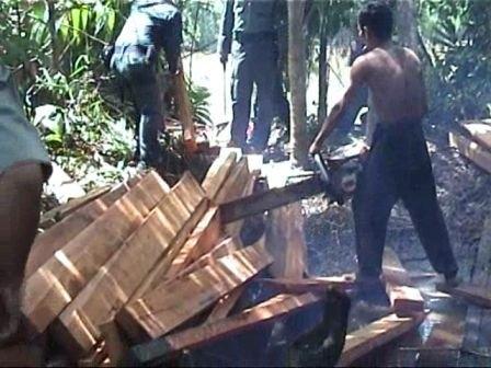 ilegal-loging